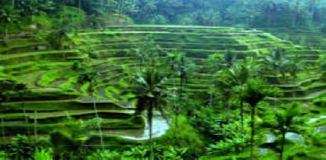 ... Forest, Painting Museum, Puri Saren and free time in Ubud marketFamous Forest Paintings